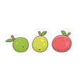 three apples green red and yellow vector image