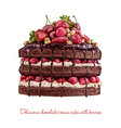 yummy chocolate creamy cake with berries vector image vector image