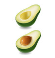 ffresh fruit avocado isolated realistic vector image