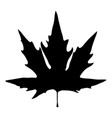 black silhouette of maple leaf on white vector image vector image