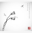 two seed heads a dry lotus flower and vector image vector image