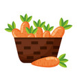 wicker basket with fresh carrots vector image