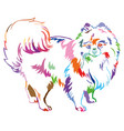 decorative standing portrait of dog pomeranian vector image vector image