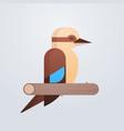 kookaburra bird icon cute cartoon wild animal vector image vector image
