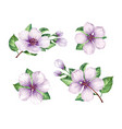 set collection of apple flowers branches isolated vector image vector image