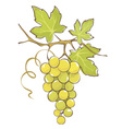 Bunch of white grapes vector image vector image
