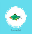 green tiger barb in white circle isolated on blue vector image vector image