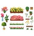 plants and flowers set elements vector image vector image