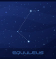 constellation equuleus little horse vector image vector image
