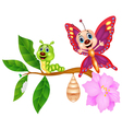 Butterfly metamorphosis cartoon vector image vector image
