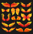 flame bird fire wings fantasy feather burning vector image
