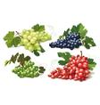 set of ripe grapes vector image