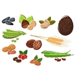 Appetizing nuts beans seeds and wheat vector image vector image
