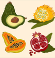 background tropical fruit vector image vector image
