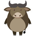buffalo stands on white background vector image vector image