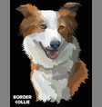 colorful border collie image vector image vector image