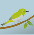 japanese white eye bird vector image vector image