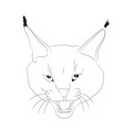 portrait of a lynx drawing lines vector image vector image