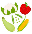 set with corn and vegetables vector image