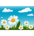 Field with chamomile vector image
