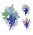 black wine grape blue violet natural color grape vector image vector image