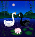 image of two swans vector image