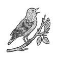 nightingale bird sketch vector image vector image