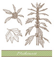 motherwort in hand drawn style vector image