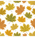 mapple leaves seamless pattern autumn vector image