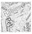 Raccoon Word Cloud Concept vector image vector image