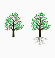 tree with leaf and root vector image vector image