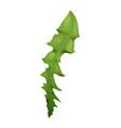dandelion leaf icon vector image
