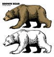 hand drawing style brown bear vector image vector image
