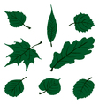 Leaf Set vector image