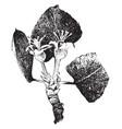apple blossom vintage vector image vector image