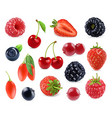 Forest berry Sweet fruit 3d icons set Realistic vector image vector image