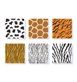 set jungle animal skin striped seamless patterns vector image vector image