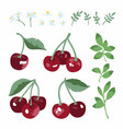 summer set with sweet cherries leaves and flowers vector image