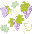 creative grapes set elements vector illustration vector image vector image