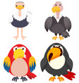four types of birds on white background vector image vector image