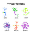 Types of neurons structure sensory motor neuron