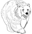 Bear vector image vector image