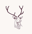 beautiful drawing or sketch head male deer vector image vector image
