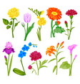 beautiful watercolor flower set handmade style vector image vector image