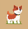 smiling welsh corgi standing on green grass dog vector image vector image