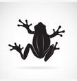 frog design on white background amphibian vector image vector image