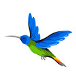 hummingbird tropical exotic bird vector image