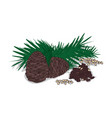 isolated clipart pine nut vector image
