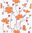 orange cosmos flowers vector image