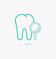 tooth with magnifier thin line icon vector image